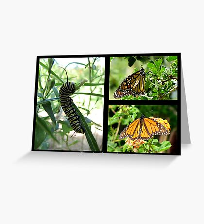 Butterfly Collage ~ Monarch Greeting Card