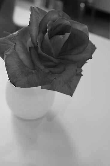 Lonesome Rose by Jordan Bails