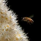 Honey Bee in Flight - Dunrobin Ontario by Debbie Pinard
