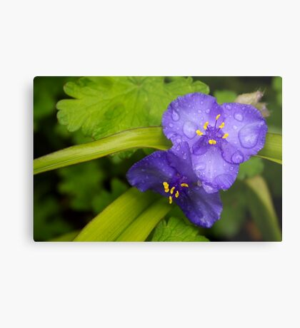 pretty blue pair Metal Print