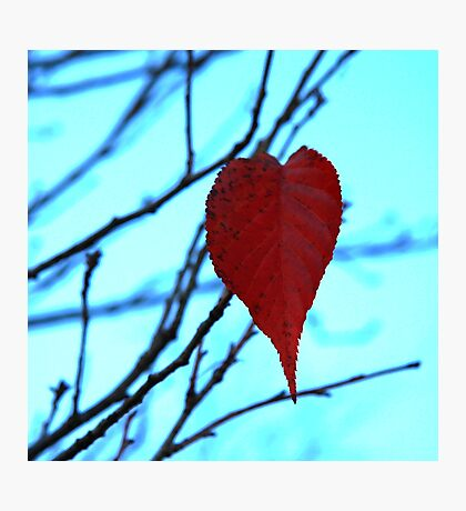 red leaf heart  Photographic Print