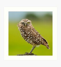 Winking  Owl-Burrowing owl Art Print