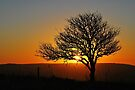 Tree Silhouette at Sunset by Mark Greenwood
