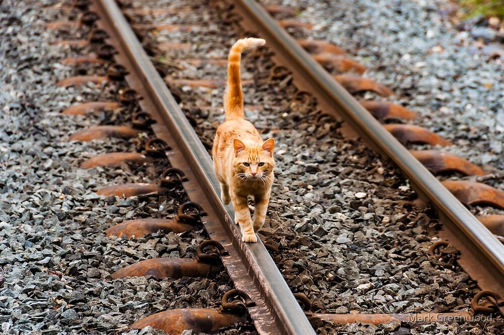 Cat On A Hot Tin Track by Mark Greenwood