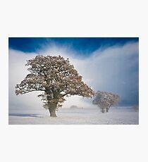 Winterscape Photographic Print