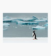 Gentoo on Ice Photographic Print