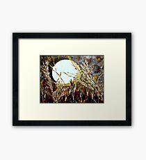 Moonlite Framed Print