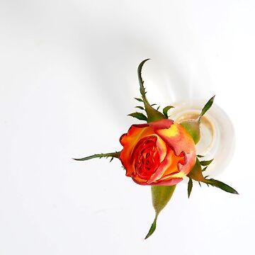 Rosebud by cherryannette