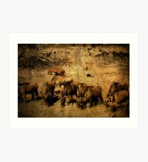Wildebeest - Mkuze Game Reserve, South Africa Art Print