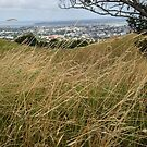 Mt Eden by zijing
