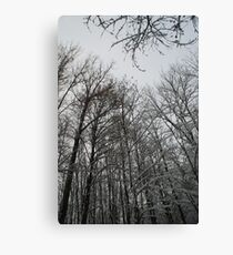Winter trees in Austria Canvas Print