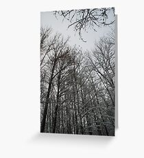 Winter trees in Austria Greeting Card