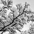 Winter's Skeletons - Marshmallow Trees by Kevin Skinner