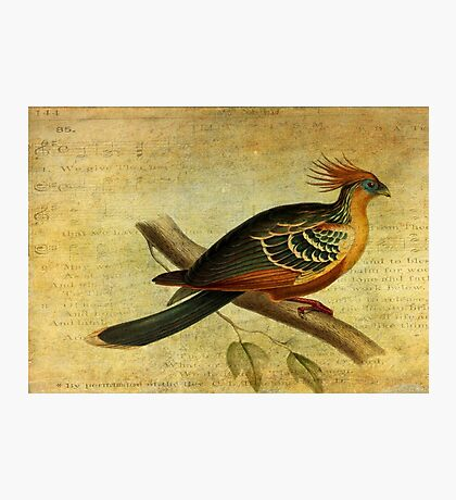 Whirring Pheasant Springs Photographic Print