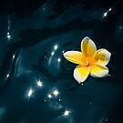 Plumeria Sparkle by Leanne Kelly