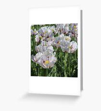 Opium Poppies Greeting Card