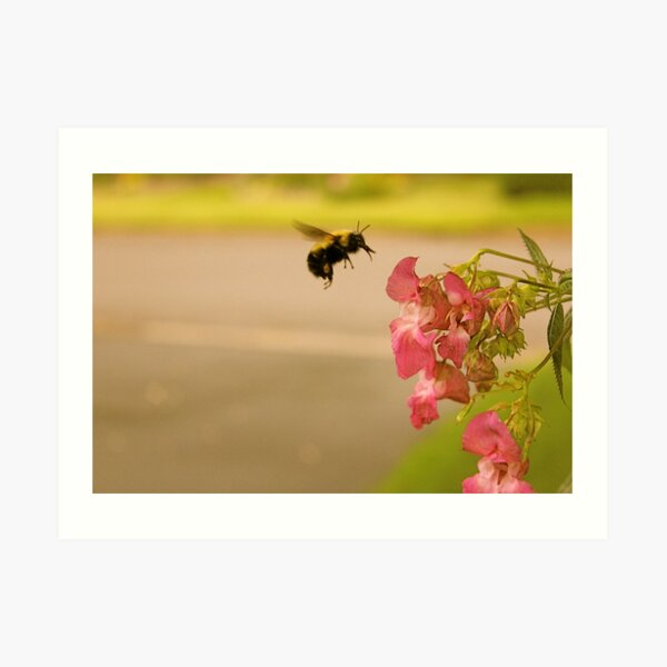 Don't Worry, Bee Happy  Art Print