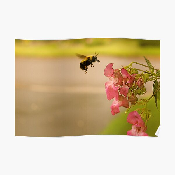 Don't Worry, Bee Happy  Poster