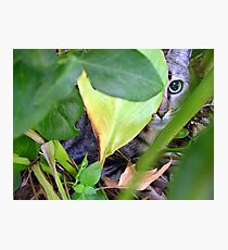 Louie the Hunter Photographic Print