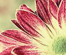 Sun in my soul by Caterpillar