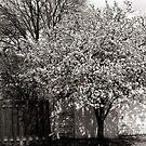 Granny's Tree by PsychicponyBear