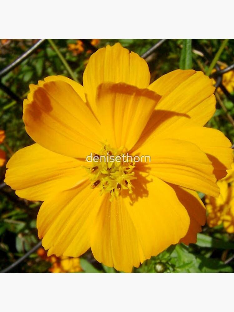 Unrestricted Flower by denisethorn
