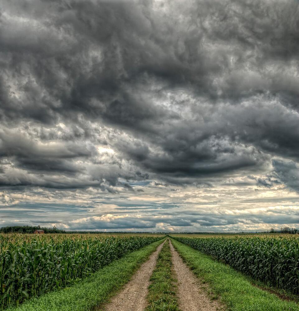 Field of Dreams by Bill Maynard