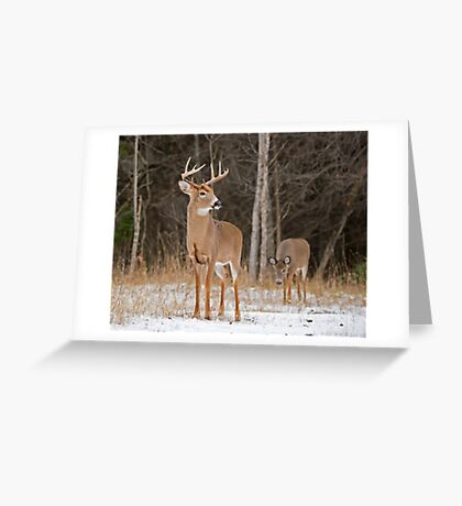 Cautious Approach Greeting Card