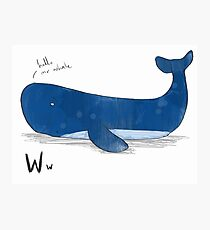 """Hello Mr Whale"" Photographic Print"