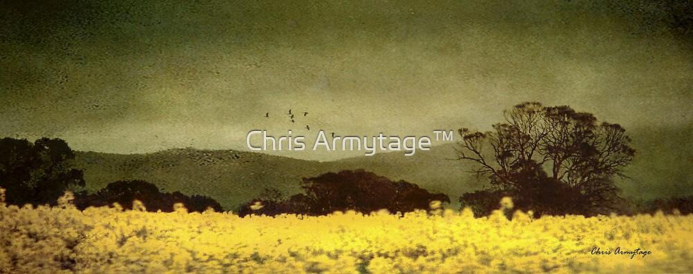 A splendid crop by Chris Armytage™