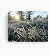 Blades of Frosted Wild Grass Canvas Print