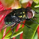 The Fly by GailD