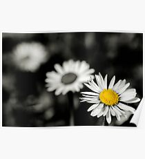 Daisy depth of field Poster