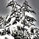 Xmas tree by Dean Messenger