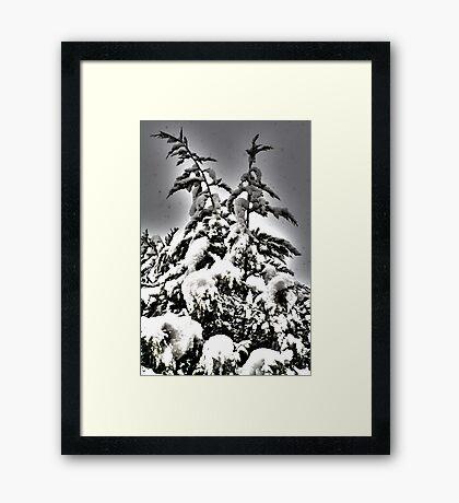 Xmas tree Framed Print