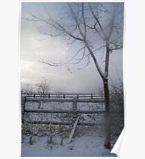 misty tree in winter Poster