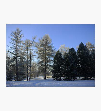 Tree groups Photographic Print