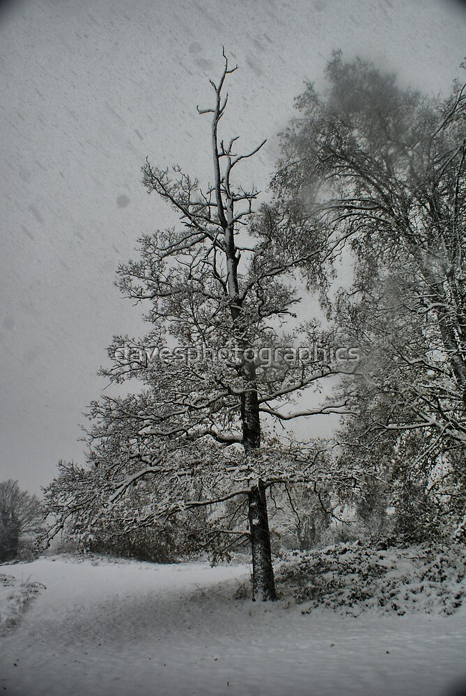 Snow Storm 1 by davesphotographics