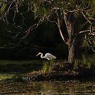 Intermediate Egret by Odille Esmonde-Morgan