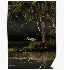 Intermediate Egret Poster