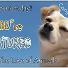 Featured in For The Love of Animals by KanaShow
