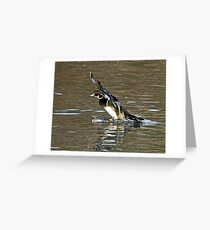 Wood Duck Splash Down Greeting Card