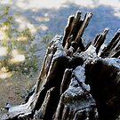 Stumpy Tufa? by Jennifer  Gaillard
