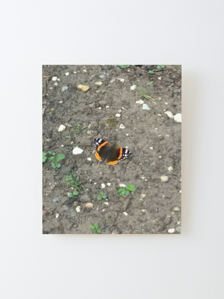 Alternate view of M.I. #42 |☼| Red Admiral Butterfly (Pearson Park) Mounted Print