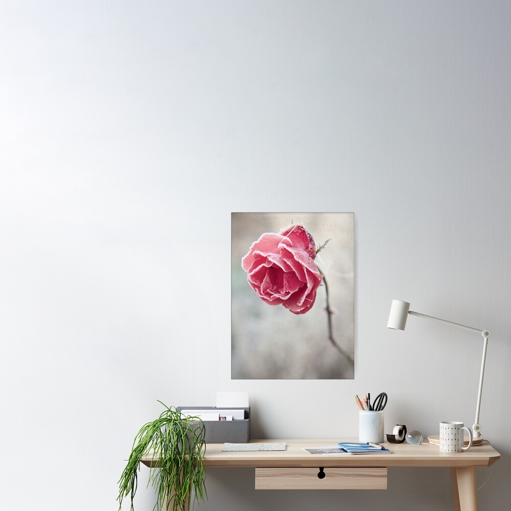 Frosted Red Rose Poster