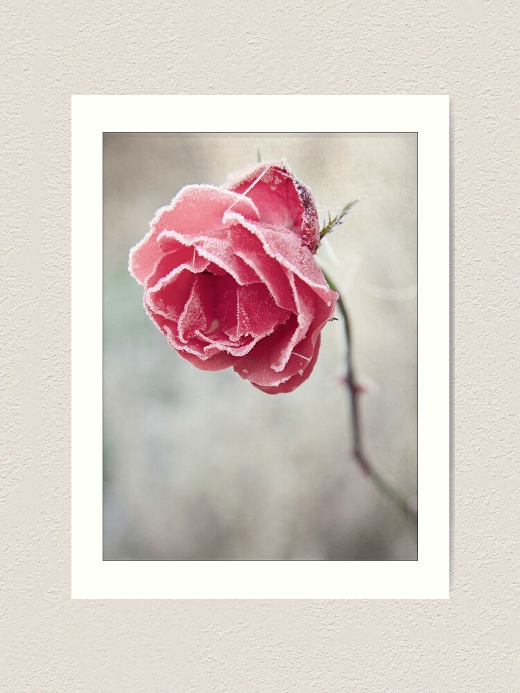 Alternate view of Frosted Red Rose Art Print