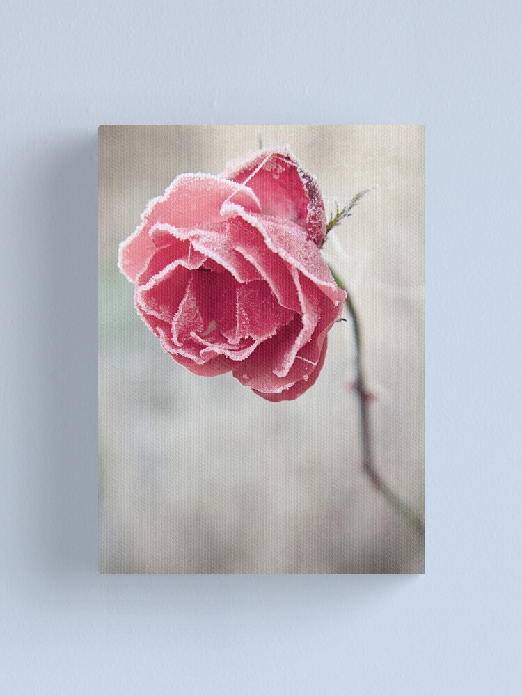 Alternate view of Frosted Red Rose Canvas Print