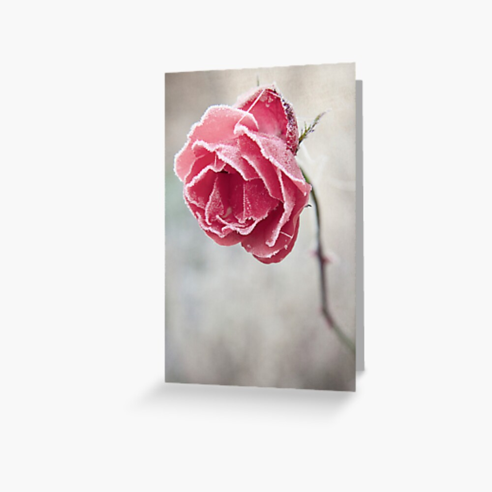 Frosted Red Rose Greeting Card