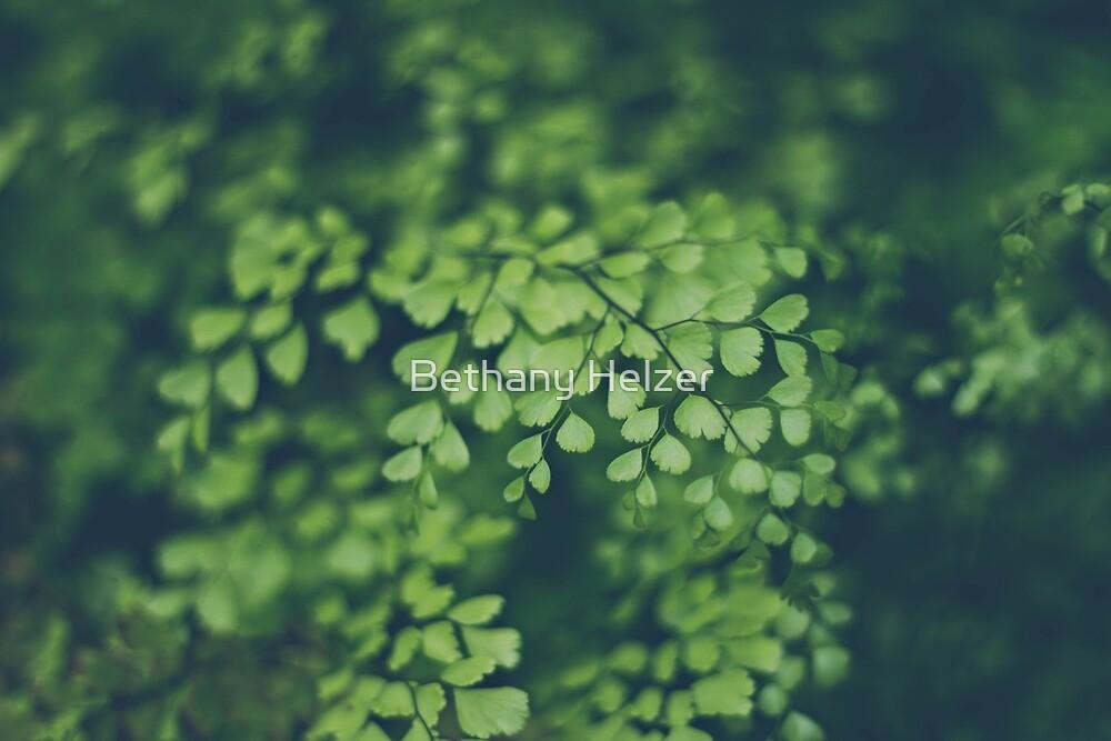Maidenhair Fern by Bethany Helzer
