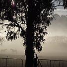 misty paddock by gaylene